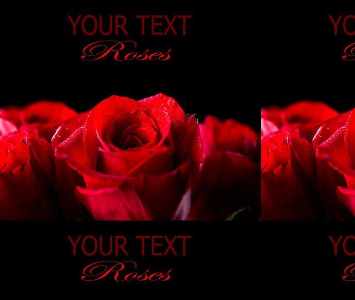 Tapeta Pixerstick Červená růže květ izolovaných na černém pozadí - Mezinárodní svátky
