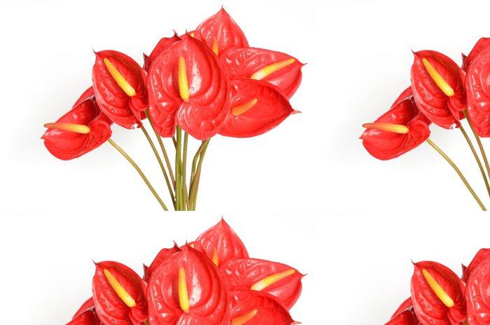 Tapeta Pixerstick Červené anthurium květiny - Štěstí