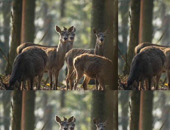 Tapeta Pixerstick Červené jeleni v lese - Savci