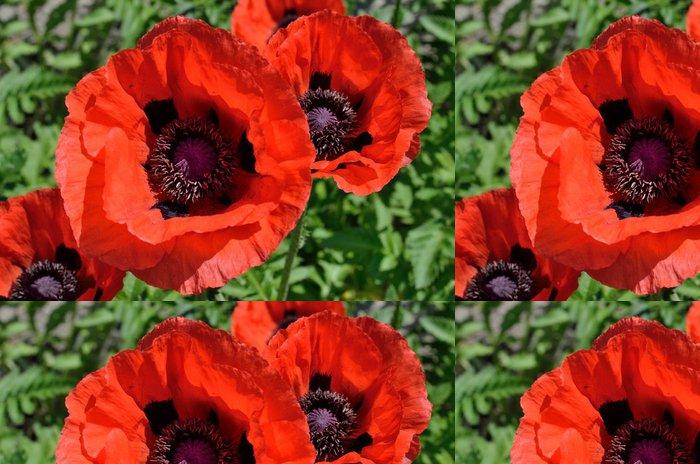 Tapeta Pixerstick Červené květy máku - Rostliny