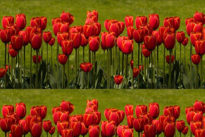 Tapeta Pixerstick Červené tulipány - Květiny