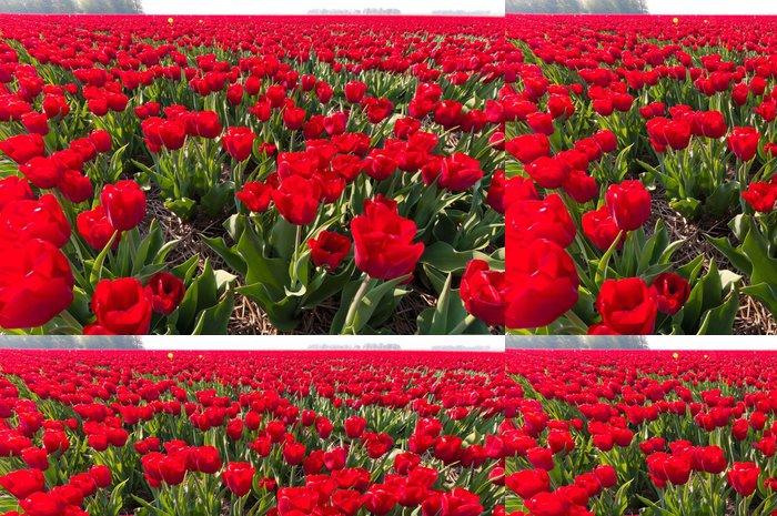 Tapeta Pixerstick Červené tulipány - Zemědělství