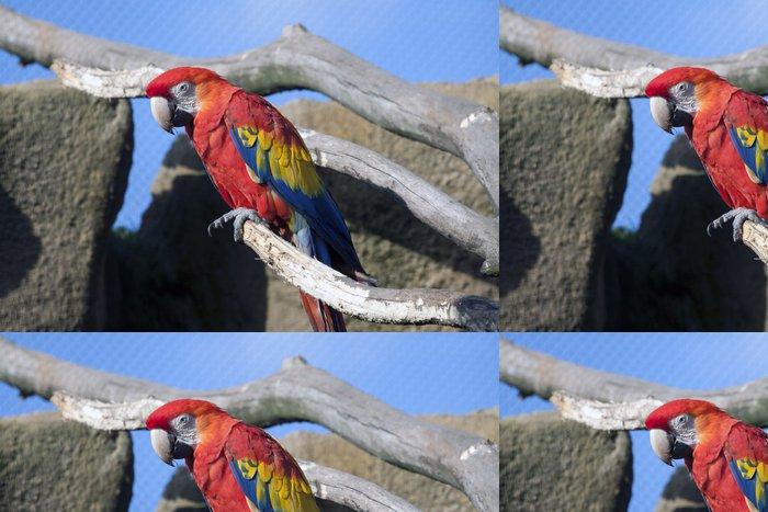 Tapeta Pixerstick Červený papoušek s modrou oblohou se spoustou Contras - Témata