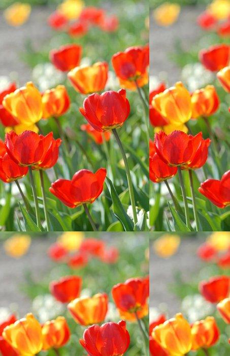 Tapeta Pixerstick Červený tulipán - Tulipa X hybrida Hort. Průvod - Domov a zahrada
