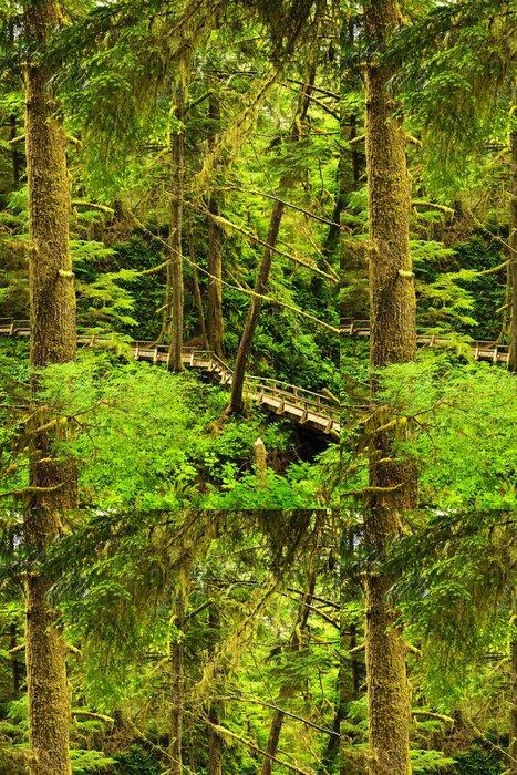 Tapeta Pixerstick Cesta do mírného deštného pralesa - Lesy