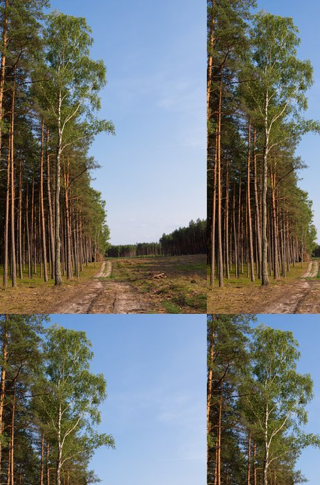 Tapeta Pixerstick Cesta lesem - Lesy