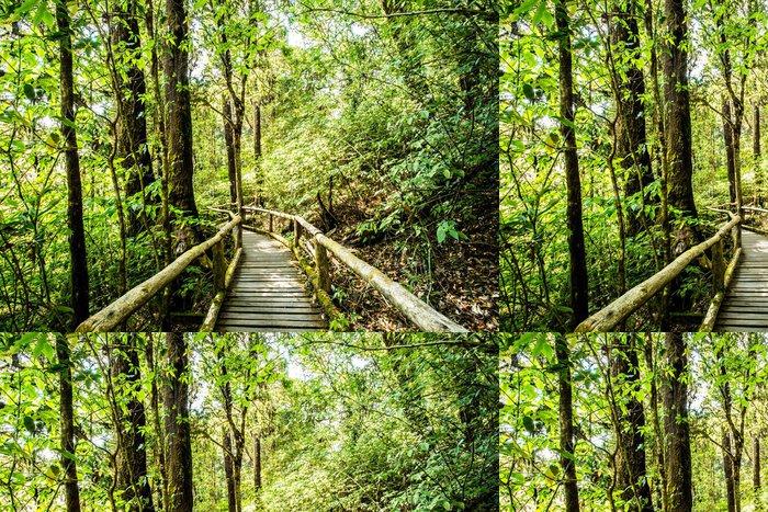 Tapeta Pixerstick Cesta v lese, doi Inthanon národního parku, Chiangmai Thajsko - Příroda a divočina