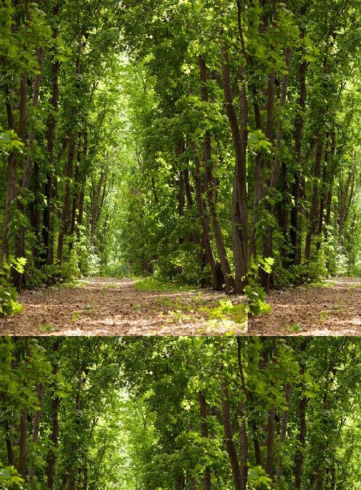 Tapeta Pixerstick Cesta v lese - Roční období