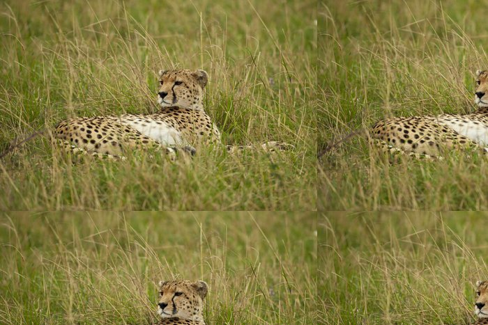 Tapeta Pixerstick Cheetah v Savannah - Savci