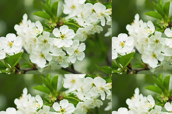 Vinylová Tapeta Cherry květiny - Rostliny
