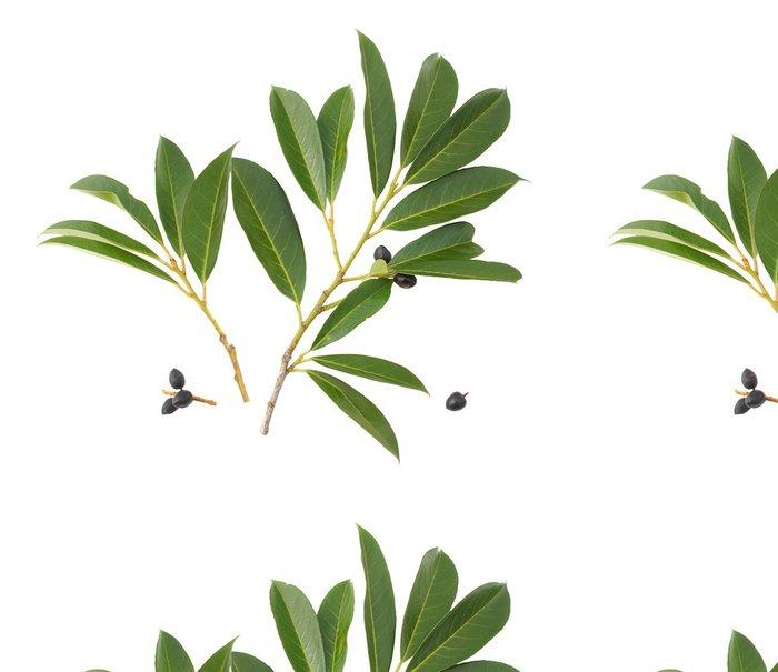 Tapeta Pixerstick Cherry Laurel - Domov a zahrada
