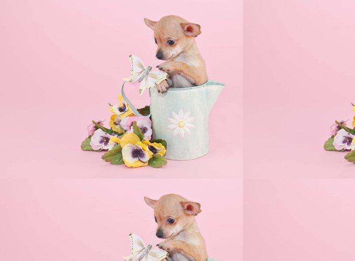Tapeta Pixerstick Chihuahua Puppy - Savci
