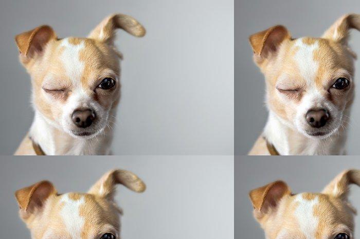 Tapeta Pixerstick Chihuahua Wink - Savci