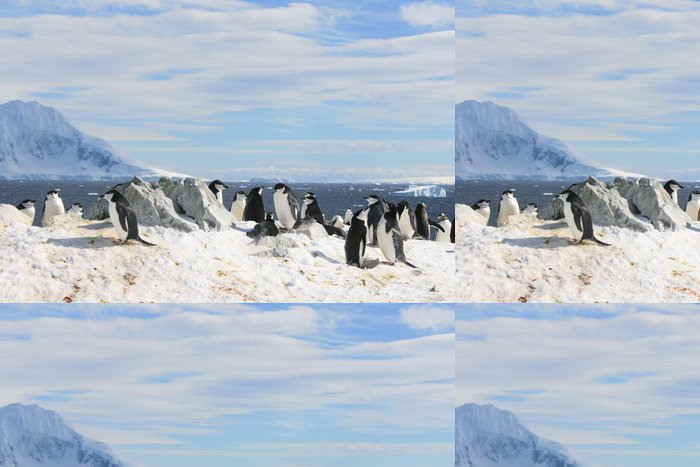 Tapeta Pixerstick Chinstrap tučňáci v Antarktidě - Ptáci