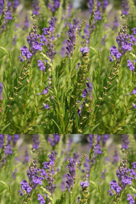 Vinylová Tapeta Čínská lebky (Scutellaria baicalensis) - Květiny
