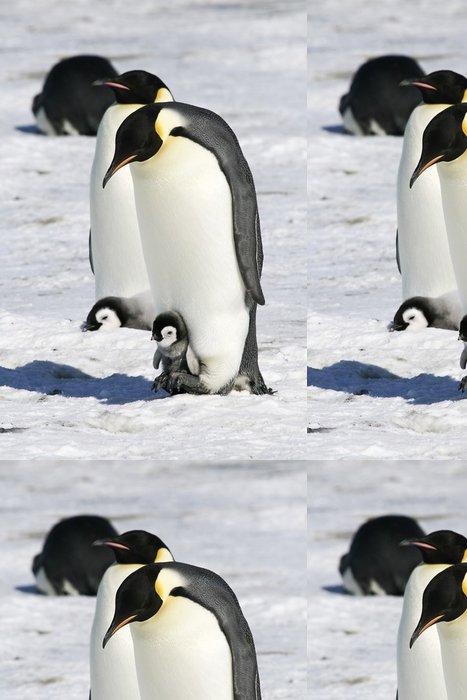 Tapeta Pixerstick Císař tučňáci na mořském ledu v Weddell moře, Antarktida - Ptáci