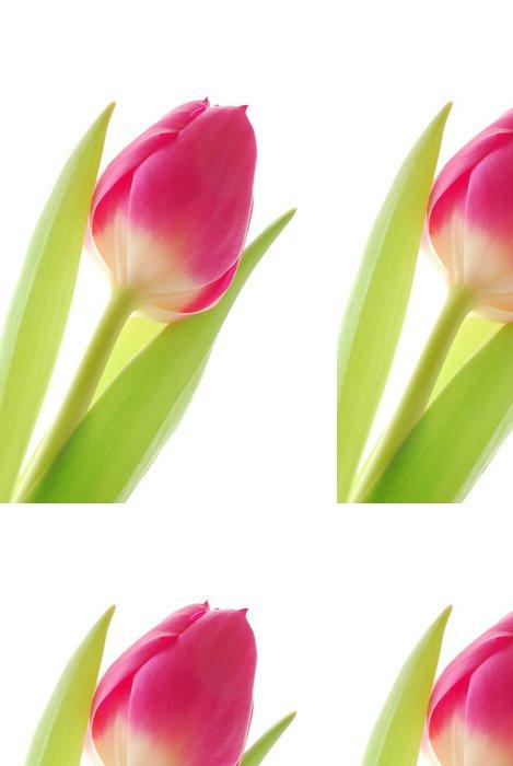 Tapeta Pixerstick Close-up barevné jarní Tulipán proti bílému pozadí - Květiny