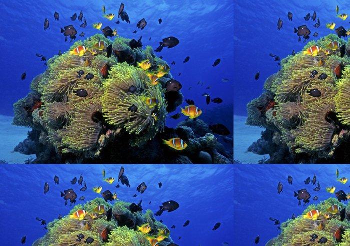 Vinylová Tapeta Clownfish kolonie, Rudé moře - Střední Východ