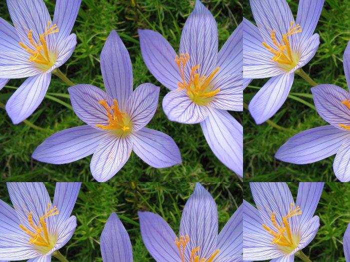 Tapeta Pixerstick Colchicum - Květiny