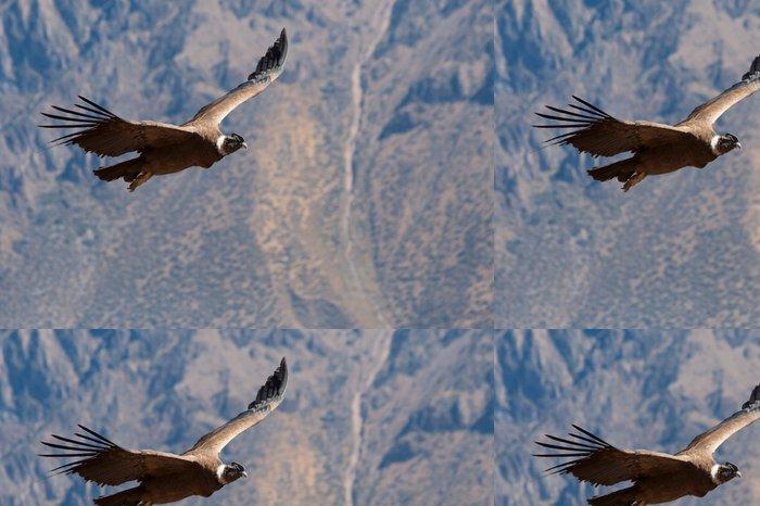 Tapeta Pixerstick Condor kolemjdoucí v Colca Canyon - Ptáci