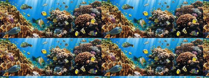 Tapeta Pixerstick Coral kolonie a korálové ryby - Témata