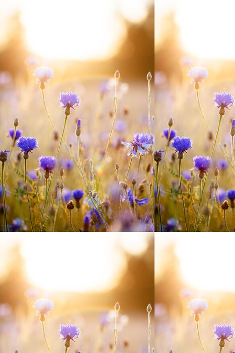 Tapeta Pixerstick Cornflowers - Chrpy
