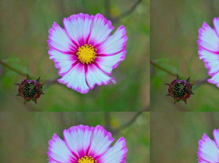 Tapeta Pixerstick Cosmos květina - Květiny