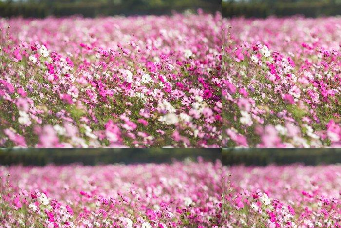 Vinylová Tapeta Cosmos pole - Květiny