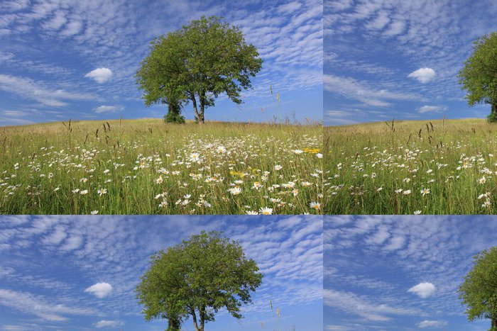 Tapeta Pixerstick Couleurs de printemps à la campagne - Venkov