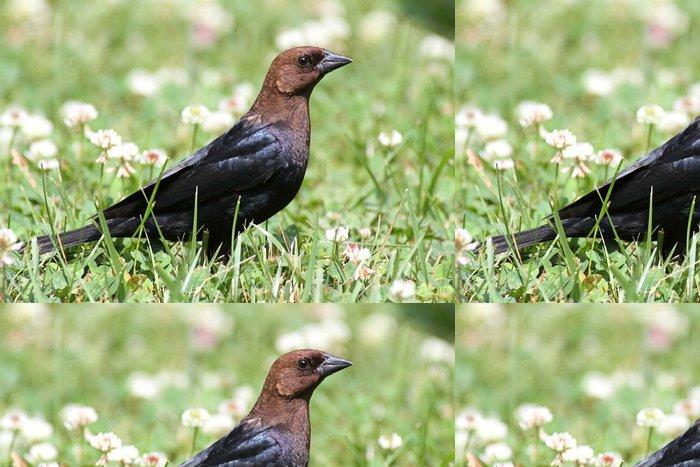 Tapeta Pixerstick Cowbird - Ptáci