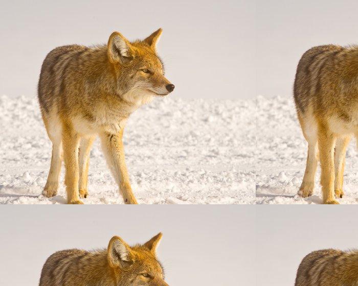 Tapeta Pixerstick Coyote naslouchá potíže - Témata