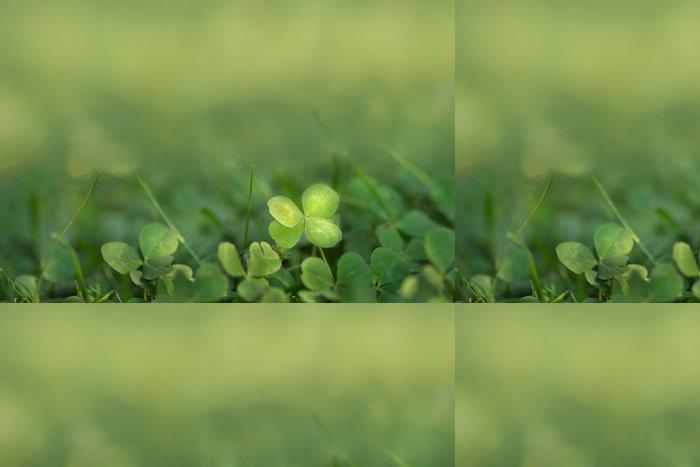 Tapeta Pixerstick Čtyři kadeřavou štěstí jetel rostoucí na slunci na zemi - Úspěch