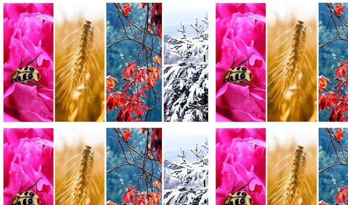 Tapeta Pixerstick Čtyři roční období: jaro, léto, podzim a zima - Roční období