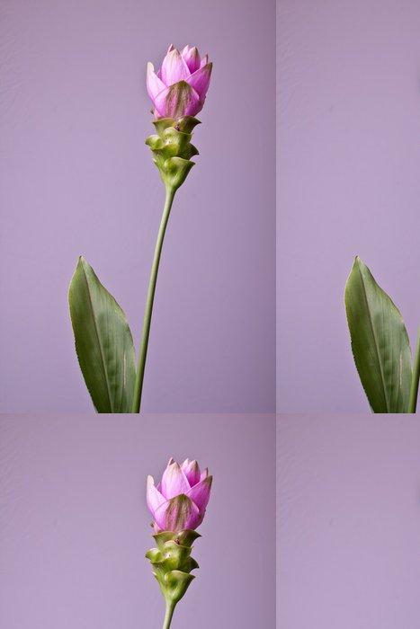 Tapeta Pixerstick Curcuma - Rostliny
