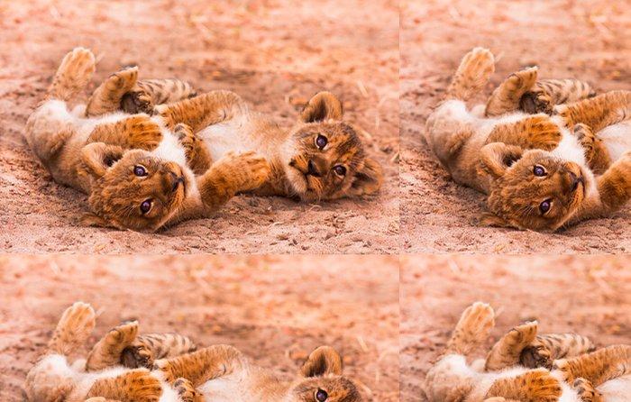 Tapeta Pixerstick Cute Lion Cubs - Témata