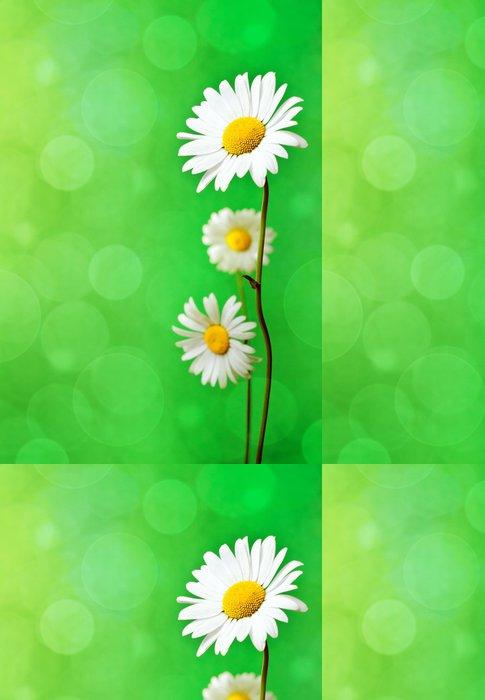 Tapeta Pixerstick Daisy květiny - Květiny