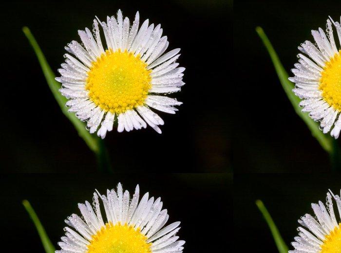 Tapeta Pixerstick Daisy s kapičkami - Květiny