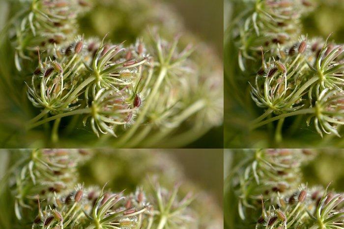 Tapeta Pixerstick Daucus carota v plném květu. - Roční období