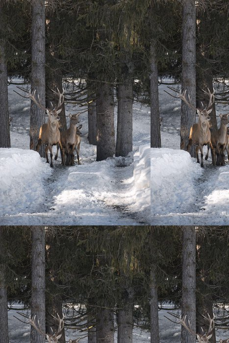 Tapeta Pixerstick Deer na sněhu backgrond - Témata