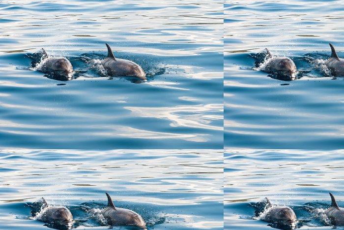 Tapeta Pixerstick Delfín - Témata