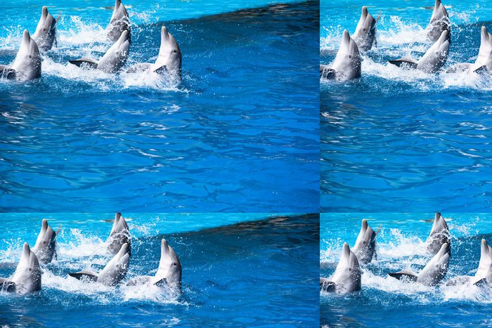 Tapeta Pixerstick Delfíny plavat v bazénu - Evropa