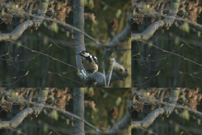 Tapeta Pixerstick Der neugierige Specht - Ptáci