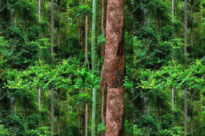 Tapeta Pixerstick Deštný prales pozadí, New South Wales, Australia - Voda