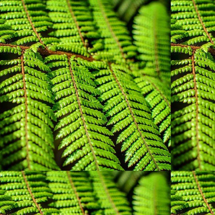 Tapeta Pixerstick Detail krásné list Fern zblízka - Rostliny