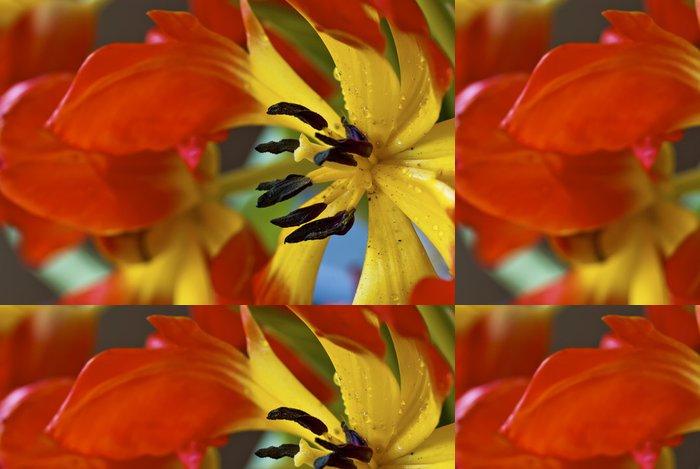 Tapeta Pixerstick Detailní záběr na červené a žluté tulipány - Květiny