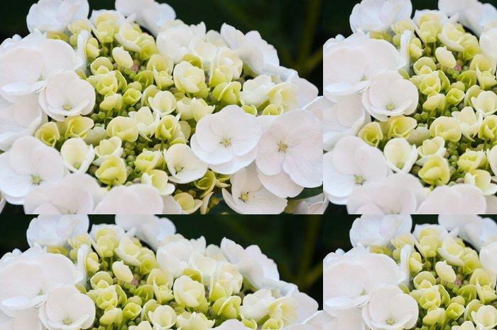Tapeta Pixerstick Detailní záběr na nadějný a bílé kvetoucí Hydrangea - Květiny