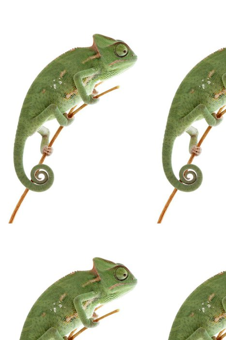 Vinylová Tapeta Dětská chameleon představuje ve světle stanu makro se zaměřením na oči - Ostatní Ostatní