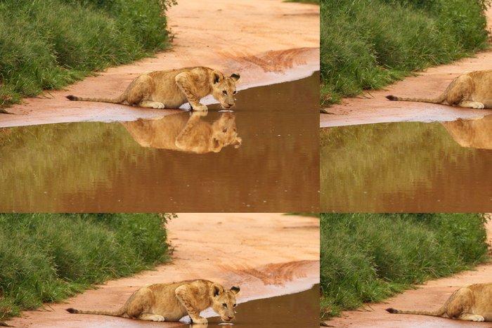 Tapeta Pixerstick Dětská Löwe trinkt o Wasserstelle - Afrika
