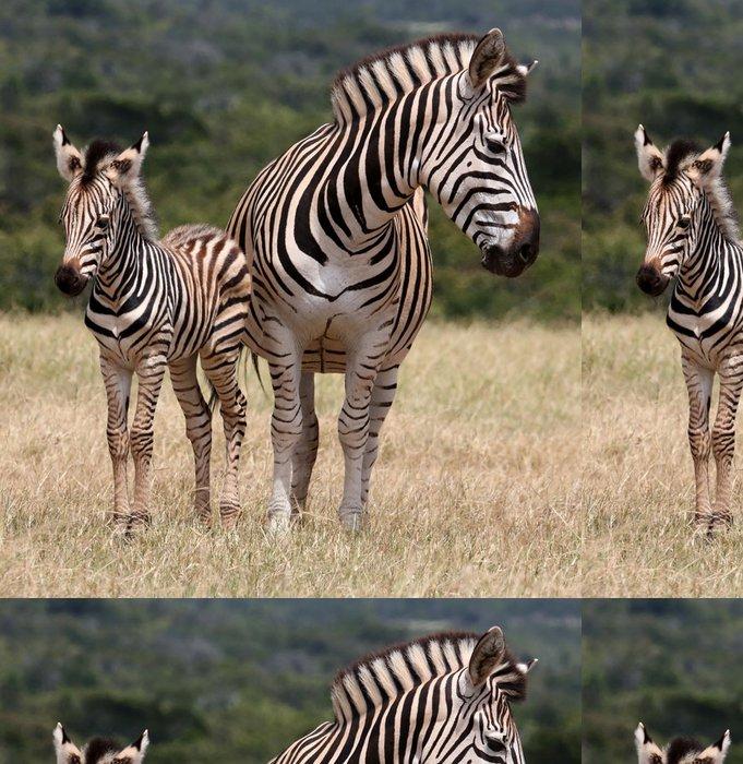 Tapeta Pixerstick Dětská Zebra a matka - Témata