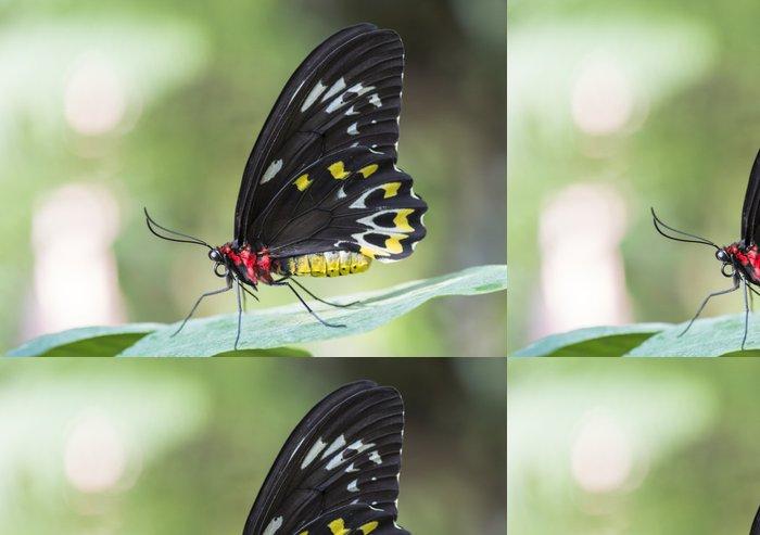 Tapeta Pixerstick Dobytek srdce motýl na listí - Témata